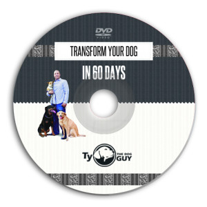 DVD 60 Days Program