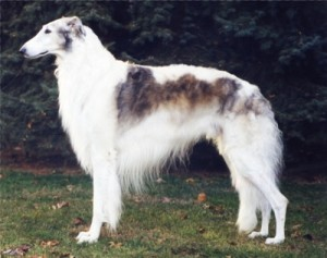 How to Train a Borzoi