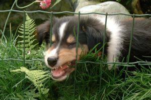 How To Stop Puppy Biting (Puppy Manners)