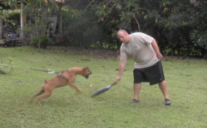 How To Train A Protection Dog 2
