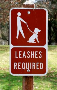 How to Get a Dog to Stop Grabbing the Leash on a Walk