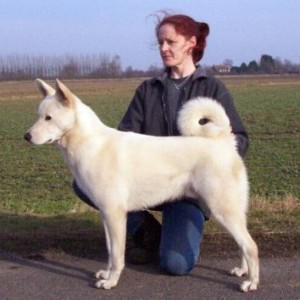 How to Train a Canaan Dog