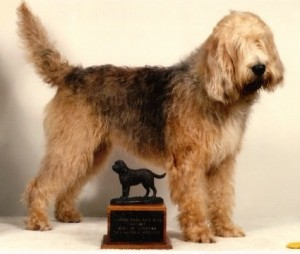 How to Train an Otterhound