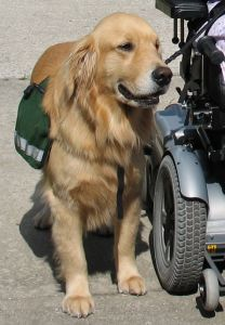 Service Dog And Therapy Dog Certifications