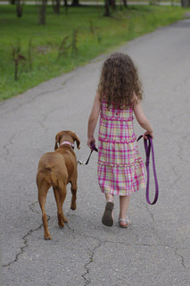 Teach a Dog to Walk on a Leash