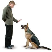 The Magic Word In Dog Training