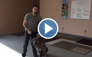 How to Deal With Dog Aggression and Sensitivity