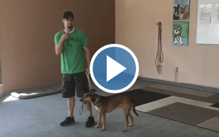 The Ten Minute Turnaround- Helping a Dog Deal With Aggression in Minutes
