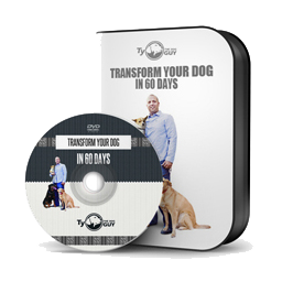 Transform-Your-Dog-in-60-Days