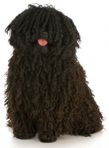 How to Train a Puli