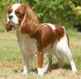 Centerville Dog Training