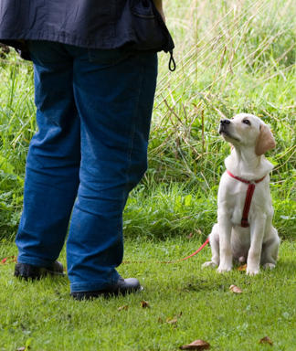 4 Steps To House Training A Puppy