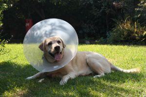 Dog Training- Many Dogs are Sick