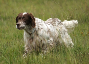 Electric Dog Training Collar Lie #412