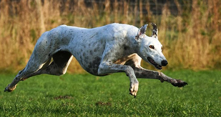 How to Train a Greyhound