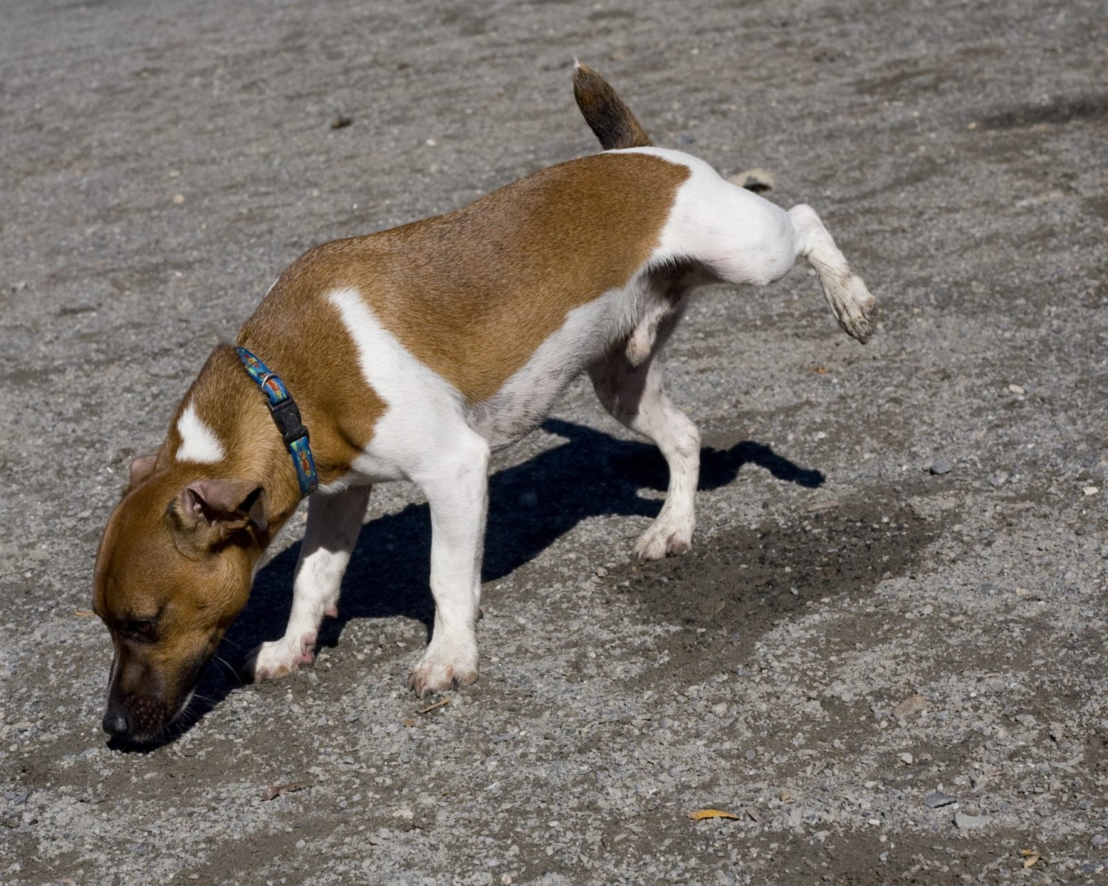 Submissive Urination And Obedience Training -