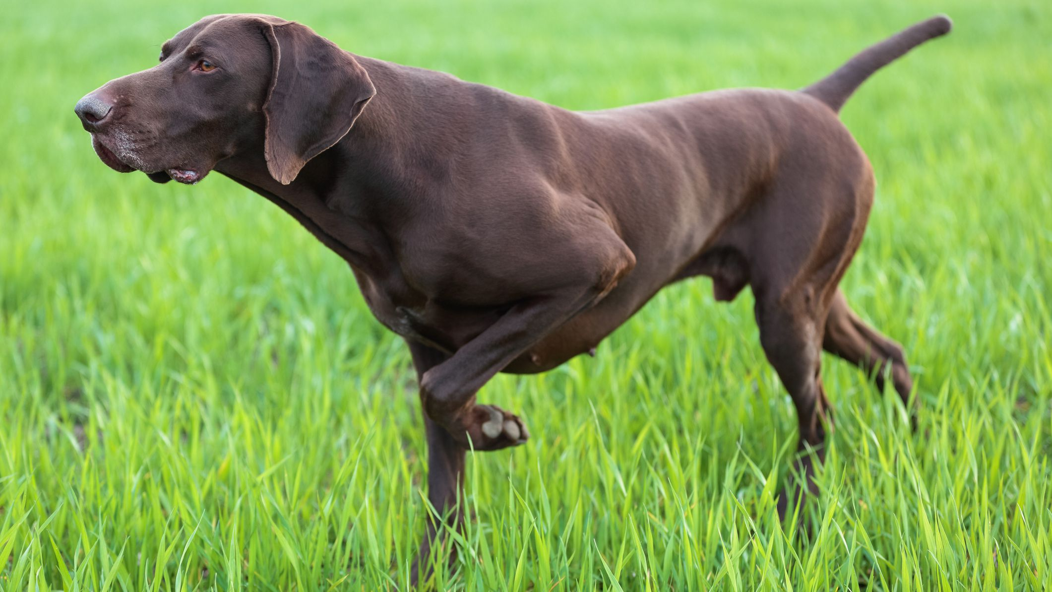 How to Train a Pointer