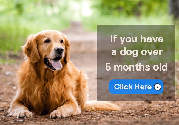 5 Month Dog Training Case Study