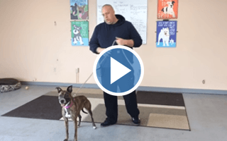 How to Use an E-collar to Teach Focus With an Anxious or Hyper Dog