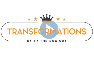 Transformation Dog Training