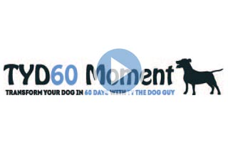 Transform your dog in 60 days moment