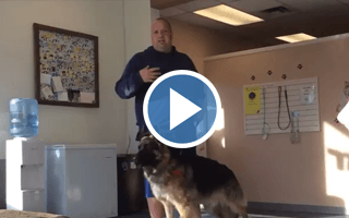 How to Train an Aggressive German Shepherd