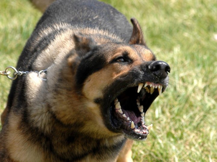 Can Making Your Dog's Brain Stronger Help With Dog Aggression and Anxiety