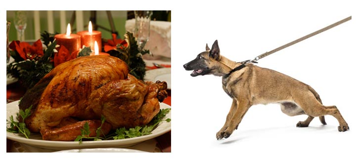 How to Keep Your Dog Off the Counter and Away From the Turkey