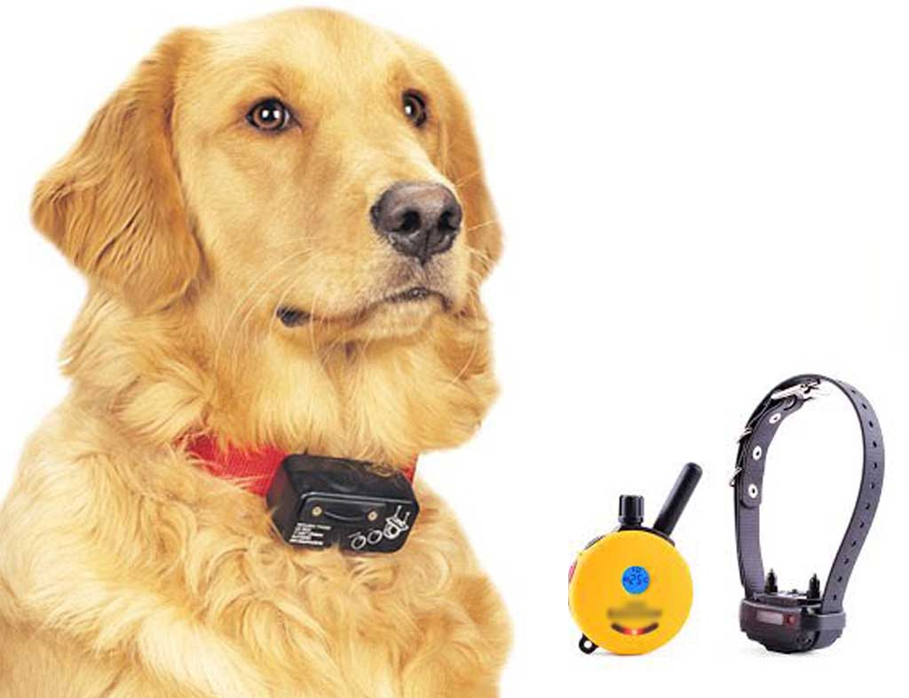 Is Using an Electric Collar for Training Your Dog Cruel