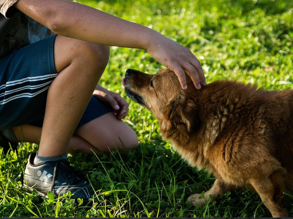 Why I Use Physical Correction With Dogs But Not Kids-opt
